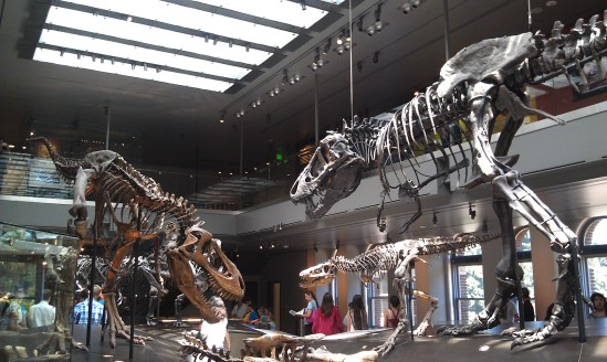 Dinosaur Hall exhibit